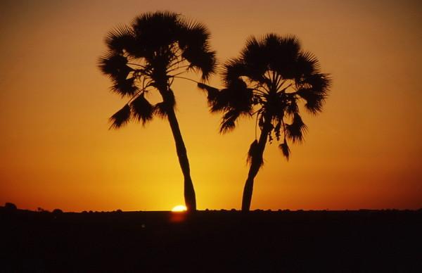 Sonnenuntergang auf Palmwag, 2001