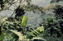 In der Natur bei Amedzofe, 1980