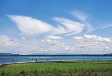 Grüner Uferrand am Nakuru See, 1.5.1987