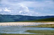 Flamingos im Bogorio See, 1988