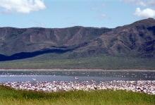 Weißrosa, die Fraben vom Bogorio See, 1989