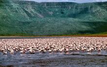 Millionen Flamingos im Bogorio See, 2.5.1987