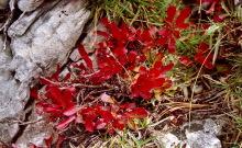 Herbstfarben, 18.9.