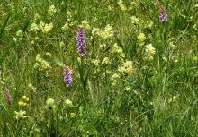Klappertöpfe und Orchideen, 29.06.