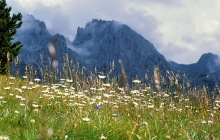 Margaritenwiese mit Sas Rigais als Hintergrund, 1999
