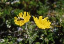 Fleißiges Bienchen, 1999